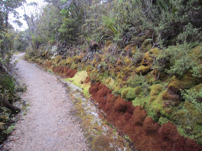 Dec 27: beautifully coloured moss along the track