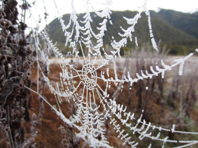 Frosted spiderweb - Makarora